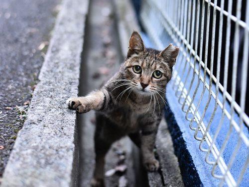 写真プリントサービス各社の印刷レビューに使ったのがこちらの猫